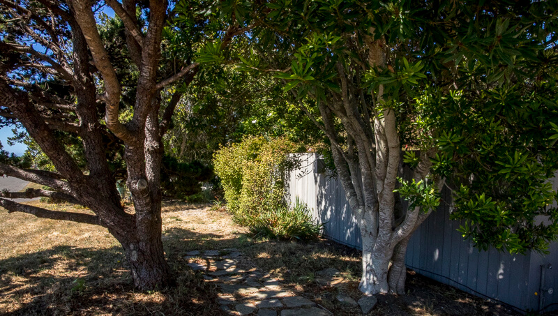 Front fence two trees and path to gate.