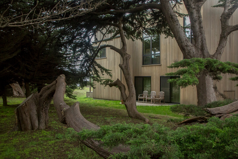 view of house through cypress tree hedgerow