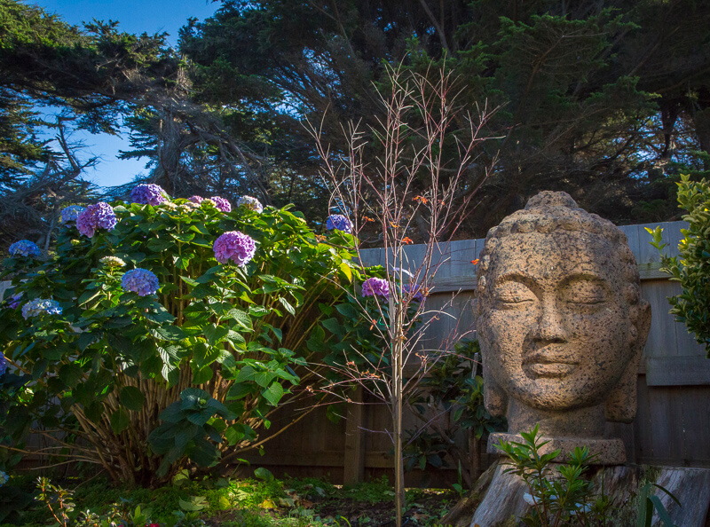 Garden with flowers and large buddha head stature.