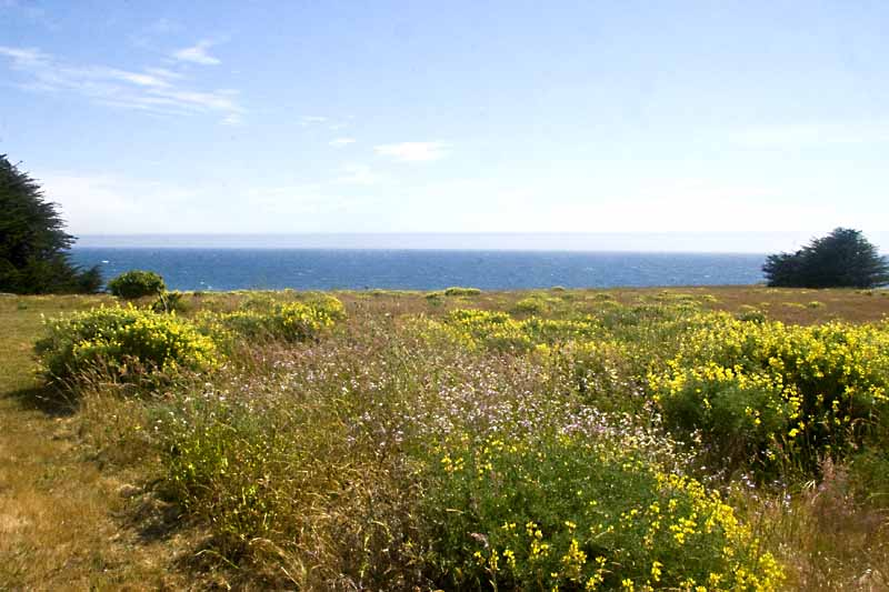 ocean and meadow in back of house