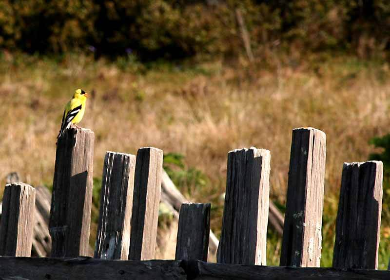 Small bird sitting on wooden fence.