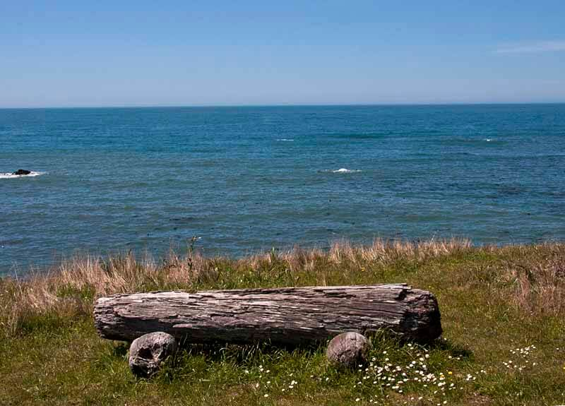 Ocean view with log bench