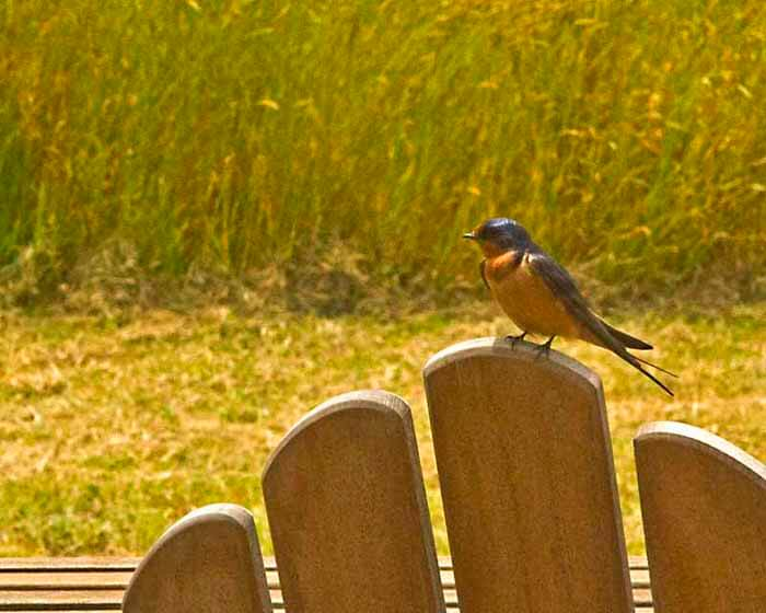 bird sitting on back of chair on deck